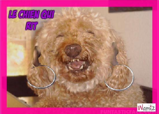 léo, le chien qui rit, lolcats réalisé sur Wamiz