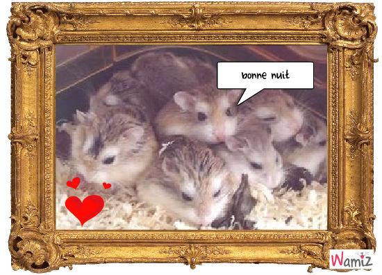 bebe hamster, lolcats réalisé sur Wamiz