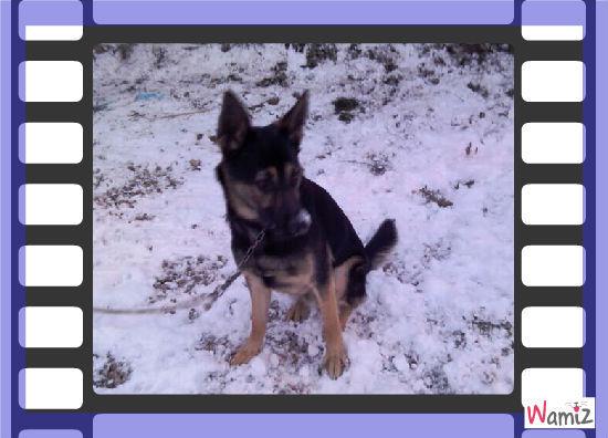 mon chien eros, lolcats réalisé sur Wamiz