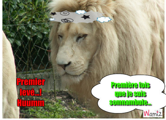 Le lionhum, lolcats réalisé sur Wamiz