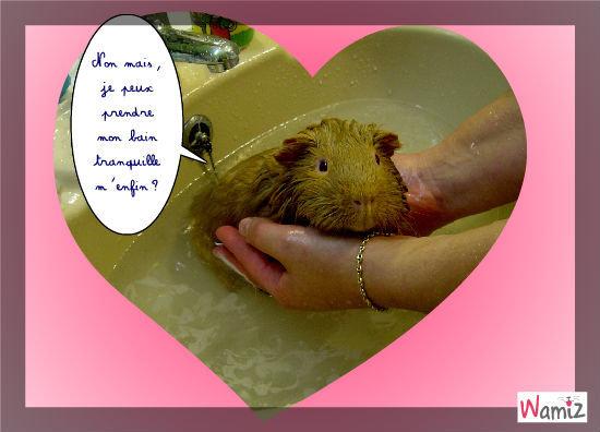 L'heure du bain, lolcats réalisé sur Wamiz