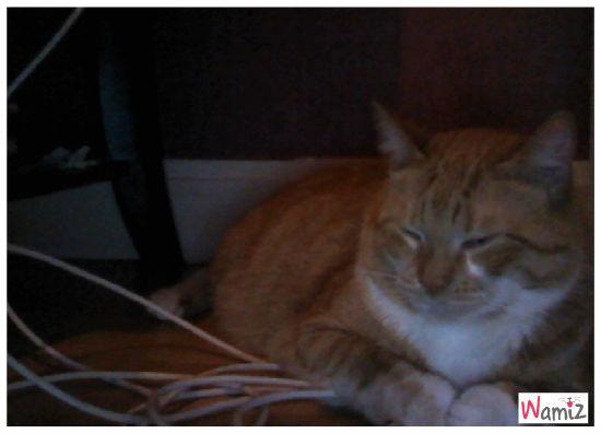 samy le chat, lolcats réalisé sur Wamiz