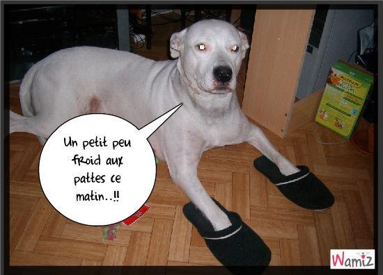 Pantouflarde!!!, lolcats réalisé sur Wamiz