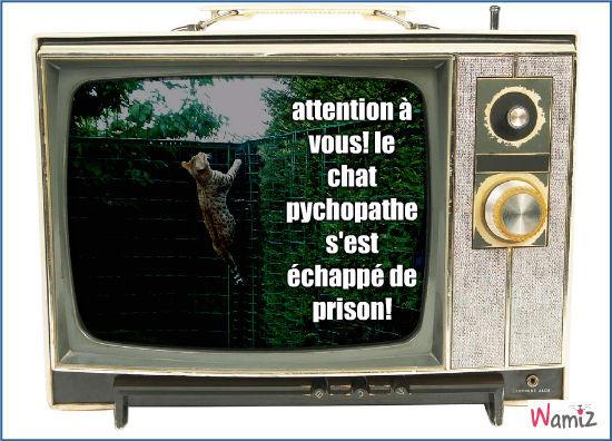 chat psychopathe, lolcats réalisé sur Wamiz