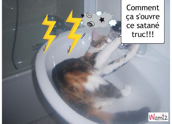 Le robinet VS le chat, lolcats réalisé sur Wamiz