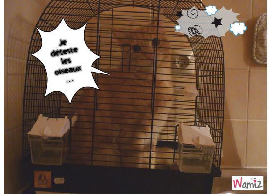 chat pas dans sa maison, lolcats réalisé sur Wamiz