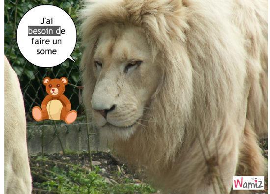 lion fatigué, lolcats réalisé sur Wamiz