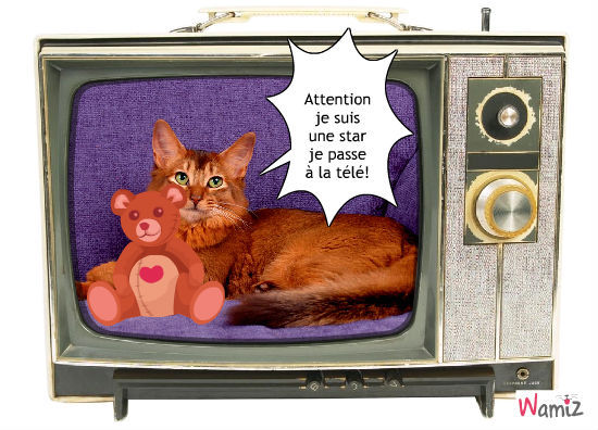 L chat star XD, lolcats réalisé sur Wamiz