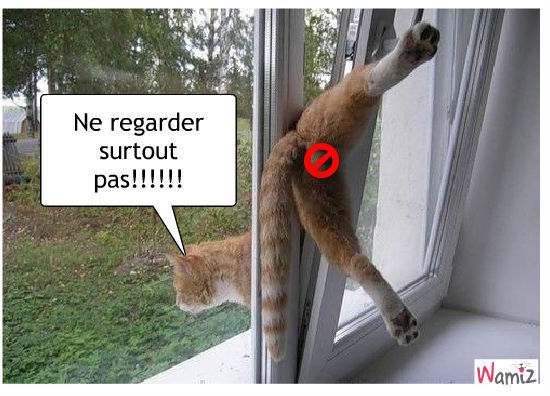 Attention au chat!!, lolcats réalisé sur Wamiz