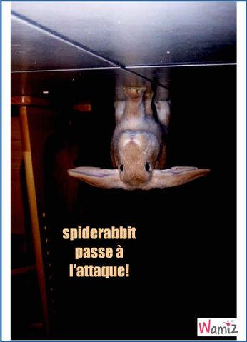 spiderabbit, lolcats réalisé sur Wamiz