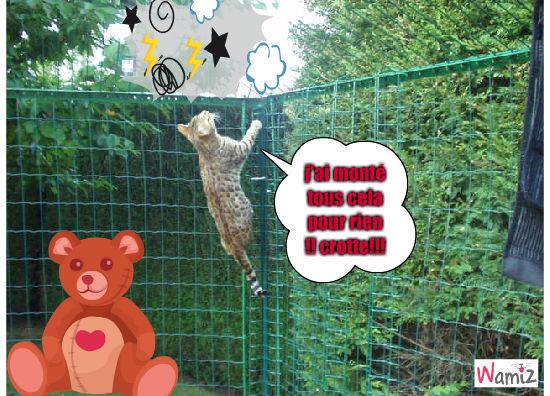 Le chat qui monte au grillage pour rien, lolcats réalisé sur Wamiz