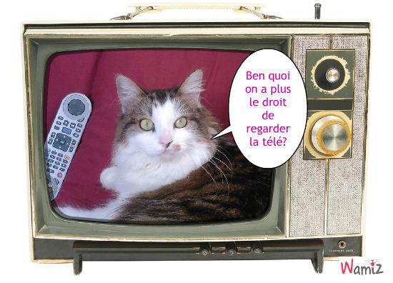 la télé c trop cool!!!!la télé c'est trop cool, lolcats réalisé sur Wamiz
