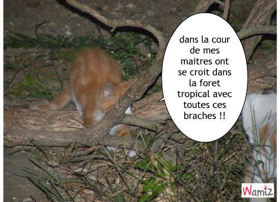 la foret tropical !, lolcats réalisé sur Wamiz