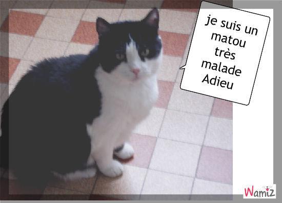 Mon chat adoré, lolcats réalisé sur Wamiz