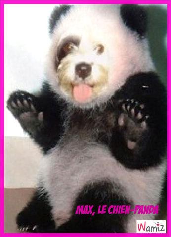Max, le chien-panda, lolcats réalisé sur Wamiz