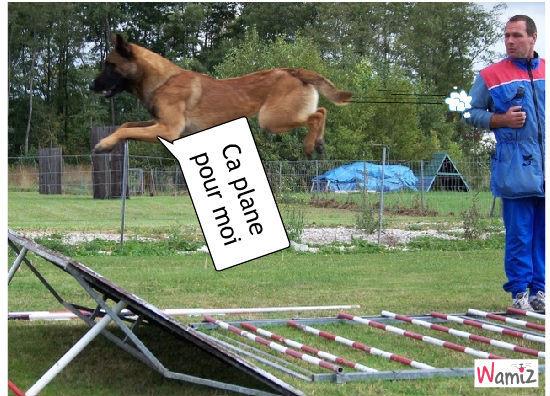 chien qui plane, lolcats réalisé sur Wamiz