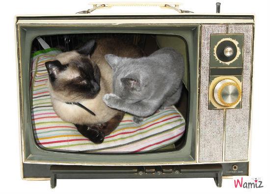 Je ne veux pas passer à la télé , lolcats réalisé sur Wamiz
