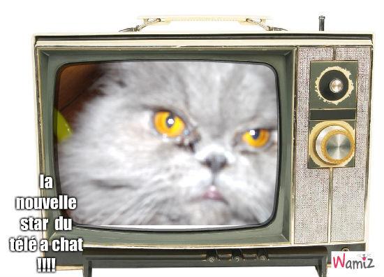 Filou la star du télé a chat, lolcats réalisé sur Wamiz