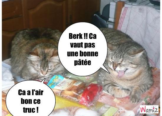 Les chats et la nourriture, lolcats réalisé sur Wamiz