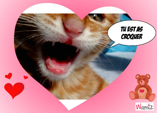 chat qui t'embrasse, lolcats réalisé sur Wamiz