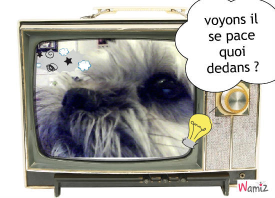 le petit chien curieux , lolcats réalisé sur Wamiz