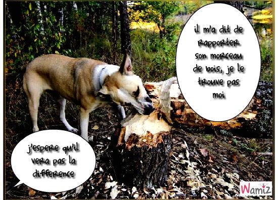 un chien et son baton, lolcats réalisé sur Wamiz