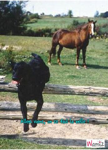 lab_cheval, lolcats réalisé sur Wamiz