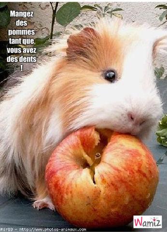 une bonne pomme pour de belles dents !, lolcats réalisé sur Wamiz