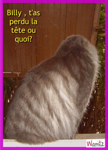 Billy, le chat sans tête., lolcats réalisé sur Wamiz