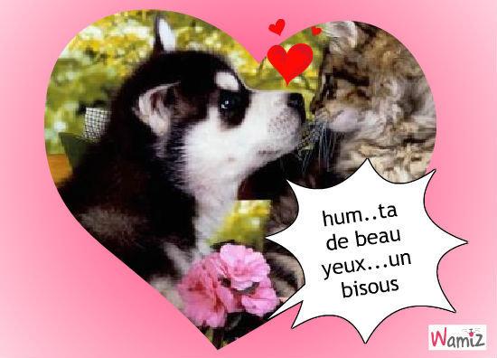 l amour d un chien et chat, lolcats réalisé sur Wamiz