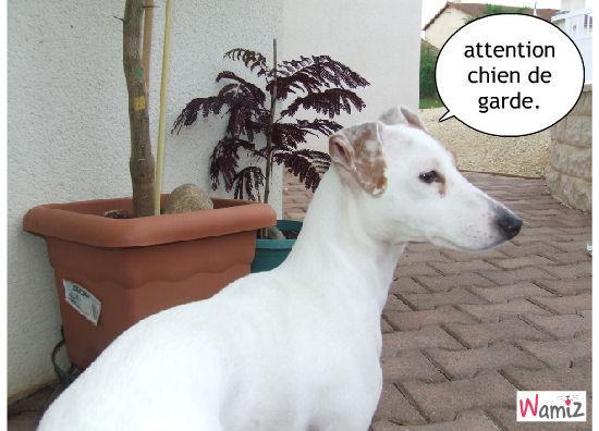 chien de garde, lolcats réalisé sur Wamiz