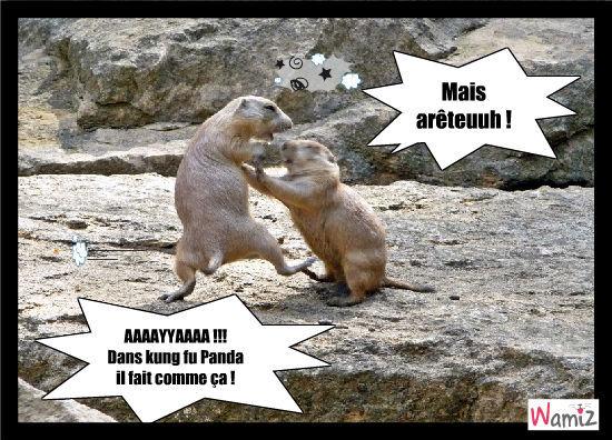 kung fu marmotte, lolcats réalisé sur Wamiz