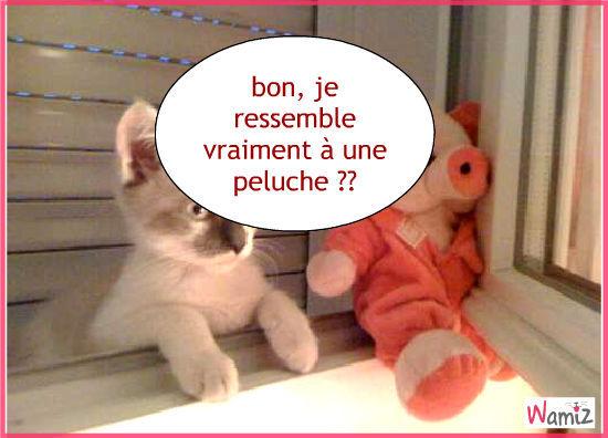 chaton ou peluche ??, lolcats réalisé sur Wamiz