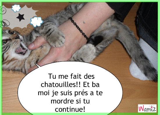 Le chat mordeur, lolcats réalisé sur Wamiz