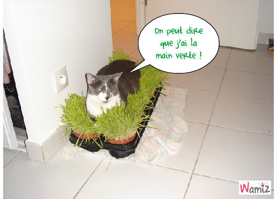 Chat jardinier, lolcats réalisé sur Wamiz