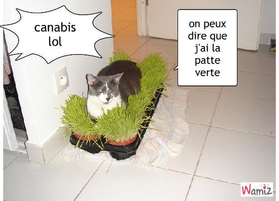 chat fumeur, lolcats réalisé sur Wamiz