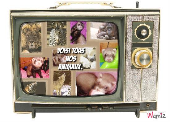 télé réalité, lolcats réalisé sur Wamiz