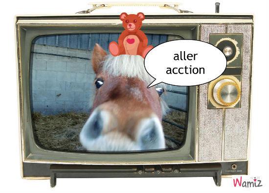 la télé des chevaux, lolcats réalisé sur Wamiz