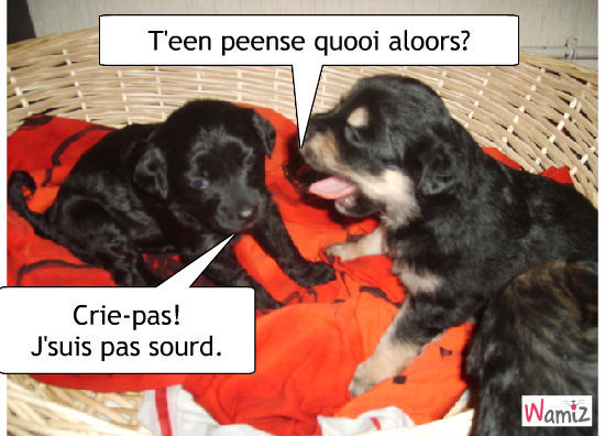 Petits chiens, lolcats réalisé sur Wamiz