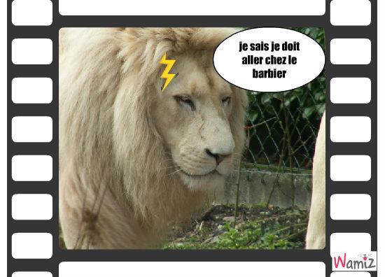 lion qui doit aller  chez le coifeur, lolcats réalisé sur Wamiz