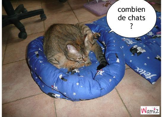 combien de chats, lolcats réalisé sur Wamiz