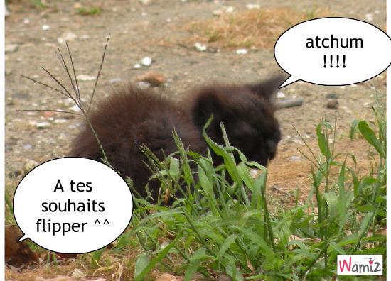 atchum !!!, lolcats réalisé sur Wamiz