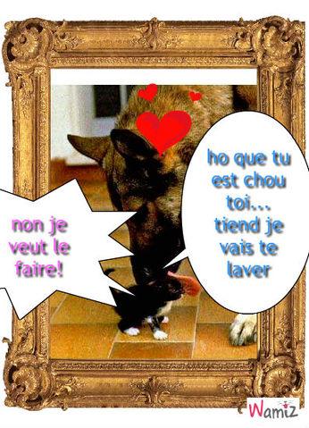 comme chien et chat !!!, lolcats réalisé sur Wamiz