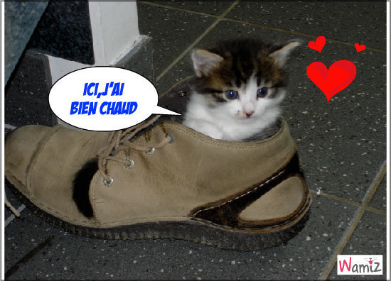 Chaton dans chaussure, lolcats réalisé sur Wamiz