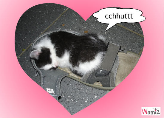Kitty fait dodo, lolcats réalisé sur Wamiz