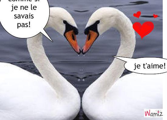 haa! l'amour, lolcats réalisé sur Wamiz