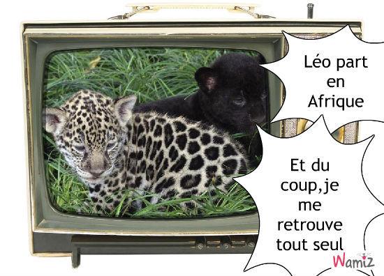 Léo, lolcats réalisé sur Wamiz