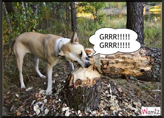 chien bucheron, lolcats réalisé sur Wamiz