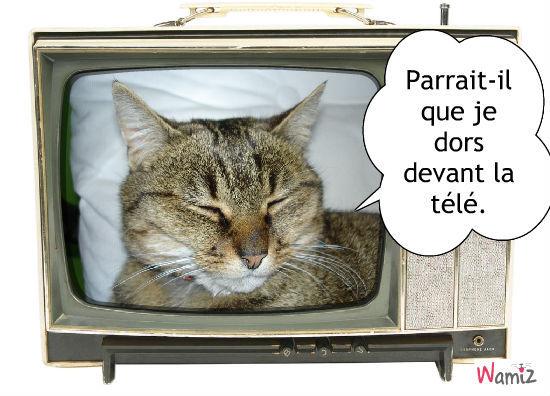 Pralinette devant sa télé, lolcats réalisé sur Wamiz