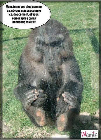 Conseil pour massage de pied..!!, lolcats réalisé sur Wamiz